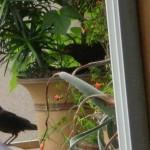 Bird_building_a_nest_in_your_flowerpot_1