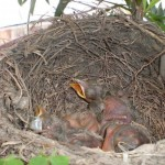Bird_building_a_nest_in_your_flowerpot_10