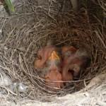 Bird_building_a_nest_in_your_flowerpot_7