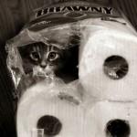 Katze in Küchenpapierpackung