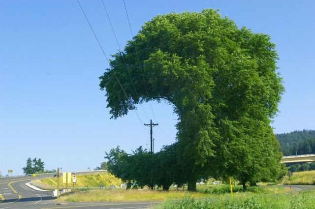 Baum frisst Leitung