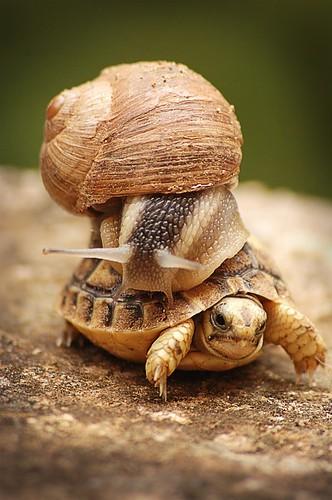 Schnecke und Schildkröte