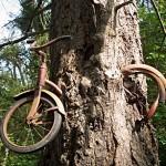 Fahrrad in Baum