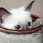 Katze in Vase