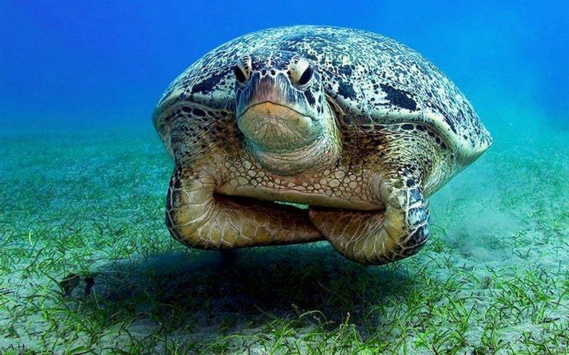 Beleidigte Schildkröte