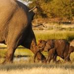 Elefantenpech