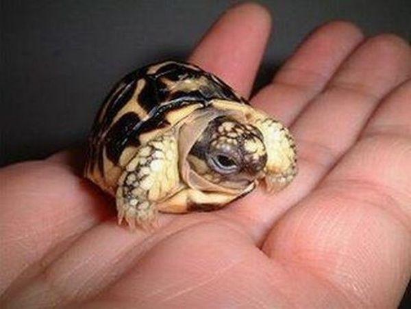Schildkr te in hand bunte bilder for Piccole tartarughe di terra