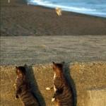 Katzen mit Hund