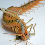 Incredible-Insect-Photographs-By-Igor-Siwanowicz-02