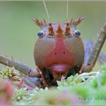 Incredible-Insect-Photographs-By-Igor-Siwanowicz-06