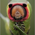 Incredible-Insect-Photographs-By-Igor-Siwanowicz-09