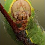 Incredible-Insect-Photographs-By-Igor-Siwanowicz-11