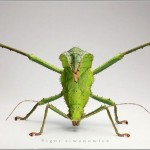 Incredible-Insect-Photographs-By-Igor-Siwanowicz-12