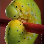 Incredible-Insect-Photographs-By-Igor-Siwanowicz-17