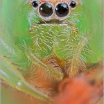 Incredible-Insect-Photographs-By-Igor-Siwanowicz-18