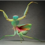 Incredible-Insect-Photographs-By-Igor-Siwanowicz-20