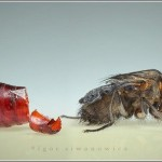 Incredible-Insect-Photographs-By-Igor-Siwanowicz-21