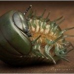 Incredible-Insect-Photographs-By-Igor-Siwanowicz-23