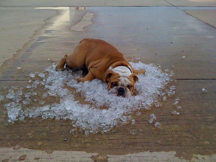 Hund mit Eiswürfeln