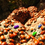 blodgett_ladybugs4_color