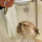 cat-bath-671