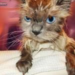 pissed_off_wet_cat