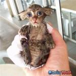 weird_wet_cat