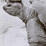 Schildkrötenhut