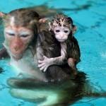 Affenbaby in Wasser