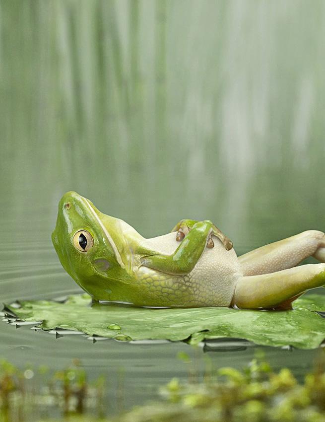 Relaxender Frosch