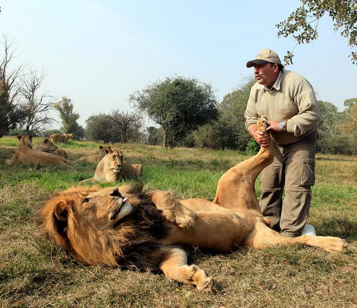 Löwenmasseur