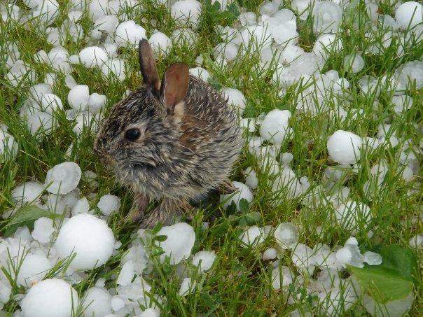Kaninchen nach dem Hagelsturm