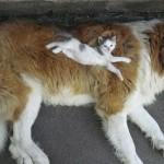 Katze auf Hund