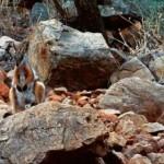 animal_camouflage_06