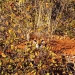 animal_camouflage_17