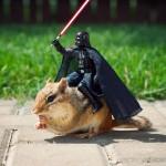 Darth Vader auf Streifenhörnchen