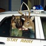 Hund und Hirsch in Polizeiauto