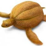 Melonenschildkröte