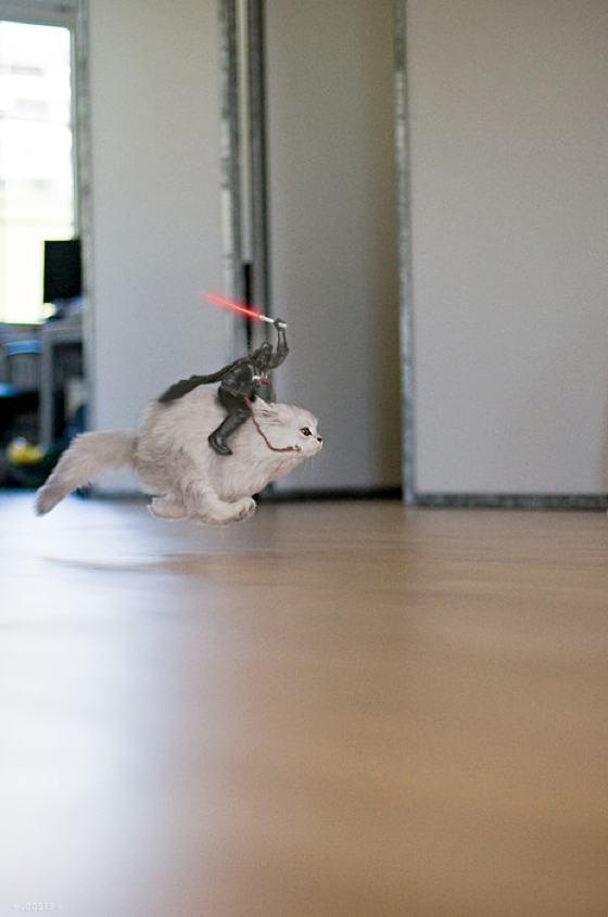 Darth Vader reitet auf Katze