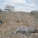 elephant_story (1)