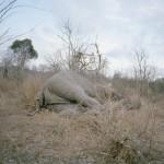 elephant_story