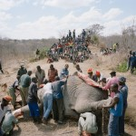 elephant_story (3)