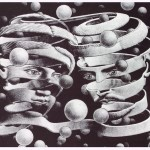 escher_bond_of_union