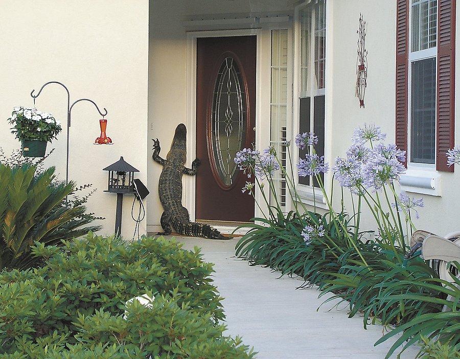 Alligator an Haustür