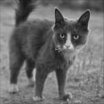 Katze mit angesengten Schnurrhaaren