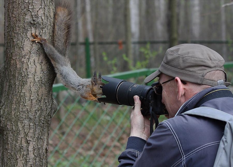 Eichhörnchen und Kamera