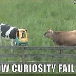 Kuh mit Auto-Einkaufswagen