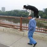 Hund reitet auf Mann