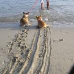 Hunde wollen nicht ins Meer