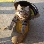 Katze in Schuh